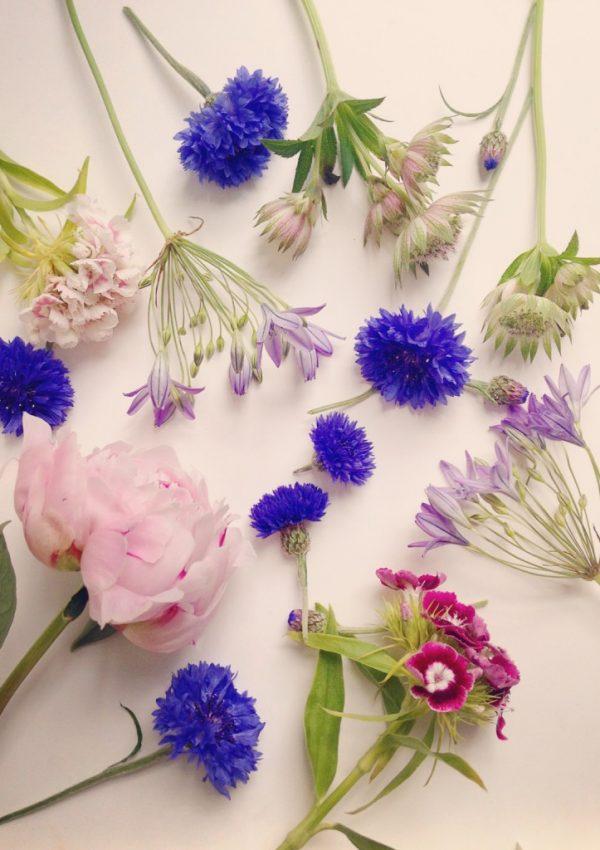 British Beauties, Celebrating British Flowers Week!