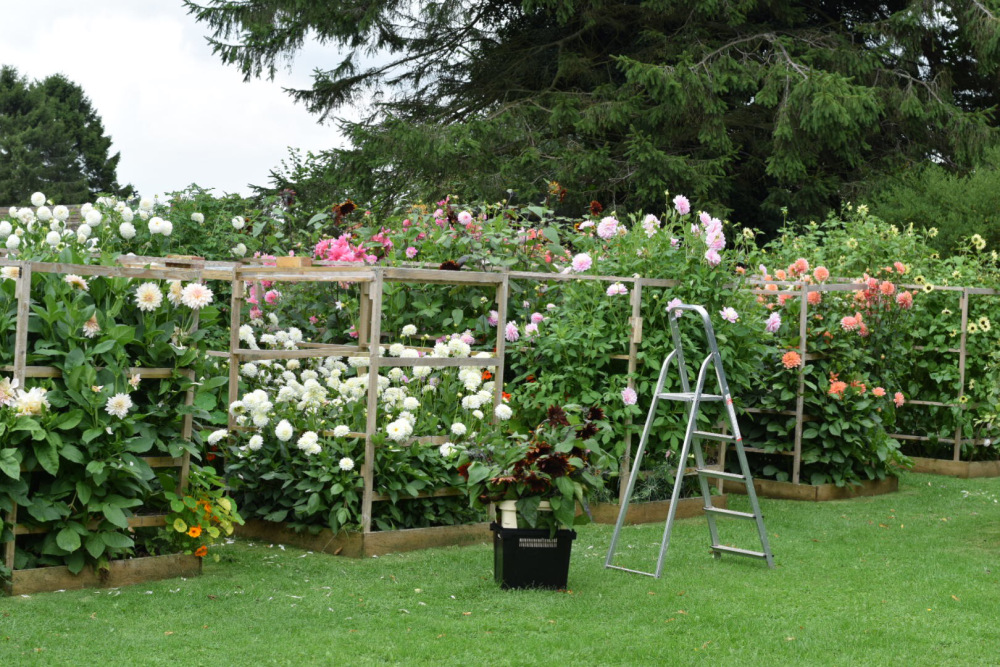 Life on a Flower Farm with Swan Cottage Flowers